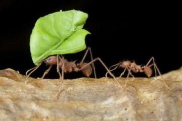 疫情致压力太大Facebook上有200万人挑选扮演蚂蚁