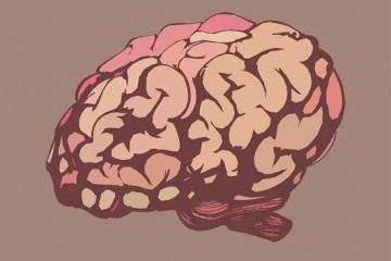 视力提升50倍后的世界长什么样不同动物交换大脑又会怎样